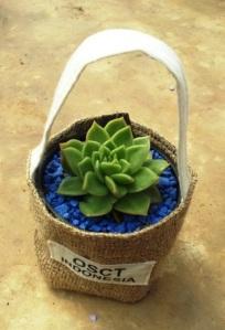 Souvenir Kaktus